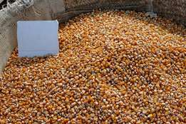 Top Grade Yellow Maize Corn For Animal Feed And Human Consumption