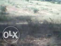 4 acres agricultural yimbo magombe for sale