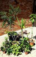 Assorted and potted plants for sale