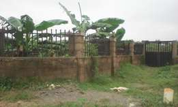 A Well arranged fish pond for sale at the back of royal valley estate.