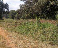 Kitisuru 1/2 acre plot for sale Kitisuru - image 2