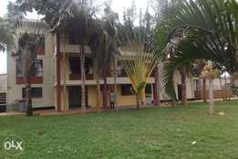4 bedroom house with 1 bed guest wing on 0.5 acre for rent in Runda