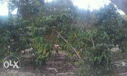 300acres of millo land on sale in kayunga-bale each is at 2m