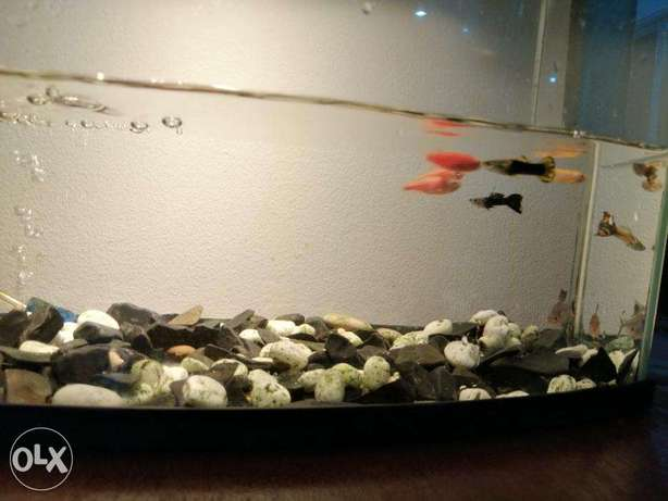 Fish Tank with Pump for Sale