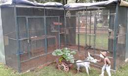 Aviary with 4 breeding pairs of Cockatiels