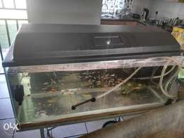 4foot fish tank for sale