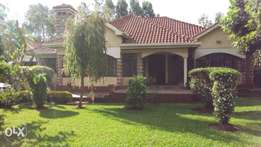3 bedroom with dsq plus 2 br guest house on a half an acre in karen