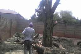 Tree felling , stump removal , site clearance , pruning , trimming , e