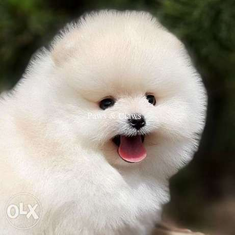 Cheerful boys and girls of the Pomeranian Spitz