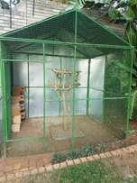 Urgent - Large Bird Cage for Sale