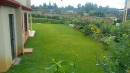 Arabic grass and or other landscaping services