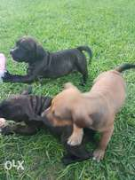 Dog puppies for sale