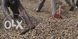 Cashew Nut Now Selling in Ilorin