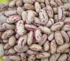 retail and large quantity of sugar bean available