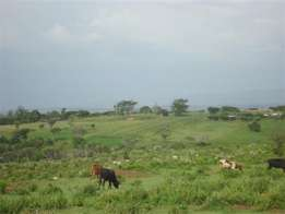 70 acres on sale at ngoswe near mogotio 2kms from ravine road