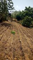 High quality Drip Irrigation 4years plus lifespan