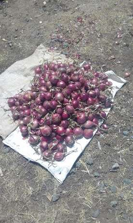 Red bulb onion Nyahururu - image 2