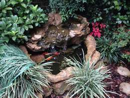 Complete fish pond for sale