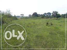7 sqm near Kikyusa Luwero fertile for agricultures at 3m an acre