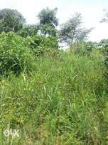 13acres of land with a title on sale in kakoge-Luweero each is at 4m