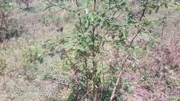 Plot for sale in ngong Ololua area
