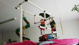 Parrot play gyms or stand. Parrot and toys not included