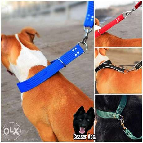 Ceaser Accessories For dogs