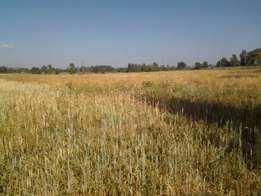 10 Acres for sale in Rumwe, Njoro
