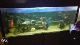 Big complete tank with fish