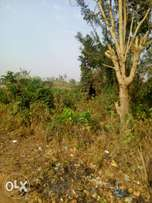 For sale standard plot and genuine land at agubelewo area osogbo