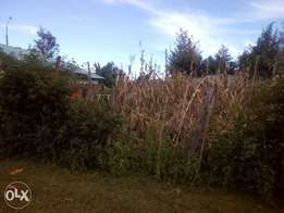 50 by 100 plot very close to the tarmac road.