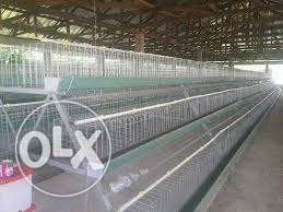 Hot-dip Galvanized Poultry And Rabbit Battery Cages In Abuja.