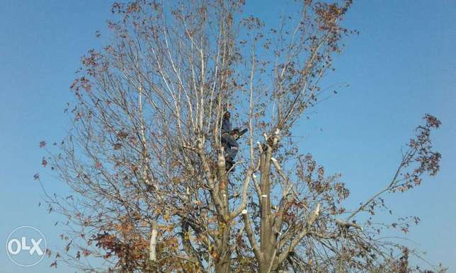 boomslopers and tree felling Brakpan - image 1