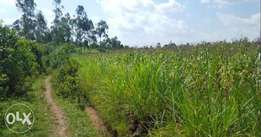 One Acre 3KM from Kakamega CBD-Quick Sale-Owner/No Agents