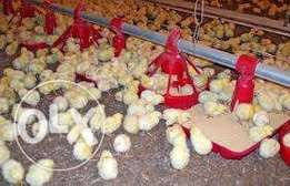 poultry farm made easy