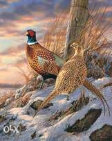 Looking for a pair of pheasants.