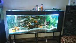 Big fish tank for sale 1.8m with fish