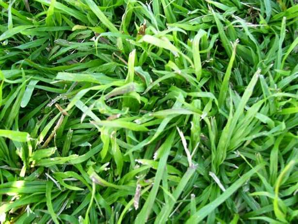 Need More Fresh Grass For Your Lawn? Johannesburg - image 1
