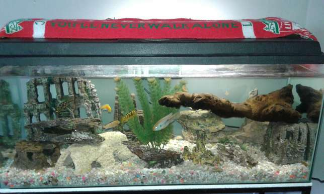 Fish tank with accessories for sale Shallcross - image 4