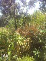 1/2 acre in ndumberi gatitu 500meter from ndumberi town