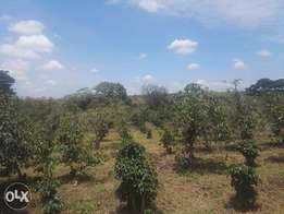 ¼ Acre Plots at KES 3,000,000, Chania Frontiers