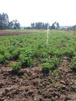 9 acre in olo kalou.1.3m per acre very prime for farming .