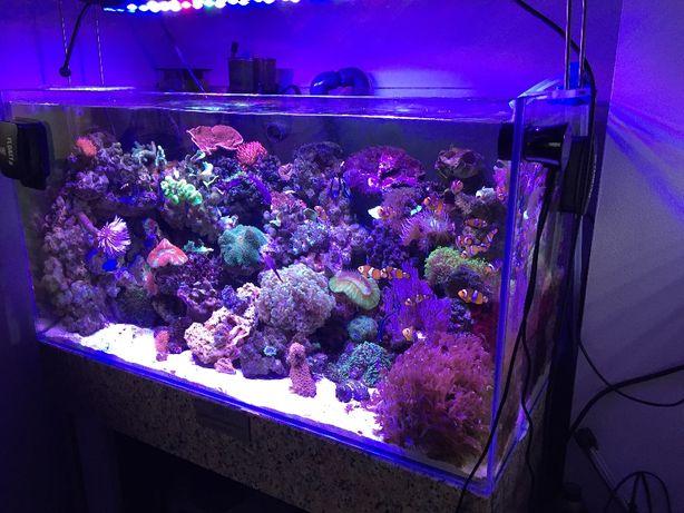 Lampa Power Led Akwarium Morskiego Lub Roślinne Wifi
