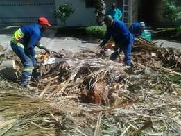 Tree felling and instant lawn