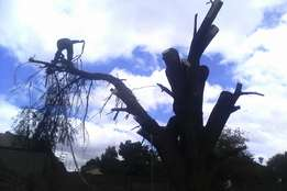 Tree cutting ,site clearance , pruning , trimming ,