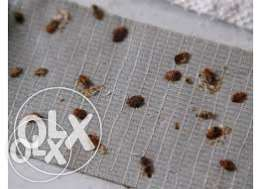 _Renowned BEDBUG Killers/Pest Control & Fumigation Services.