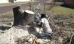 stump removals and tree felling
