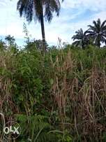 Lands for sell 100 by 100, 50 by 100, location is Akpabuyo LGA