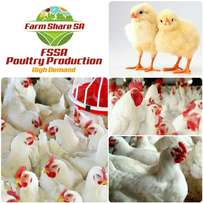 Poultry Businesses and Partnerships Packages