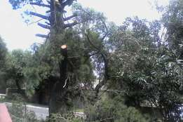 Tree cutting , site clearance, pruning , trimming , stump removal etc